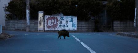 Japon_Sanglier-errant-dans-la-ville-irradiée-désertée-de-Namie_Toru-Hanai.png