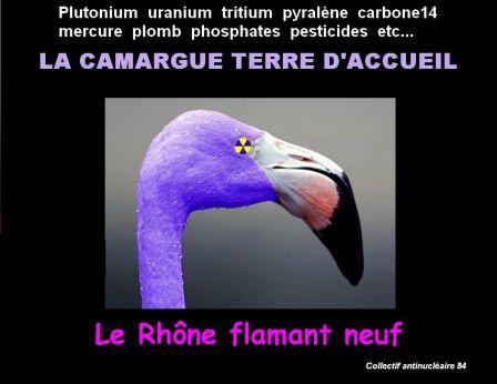 Flamant_neuf.jpg