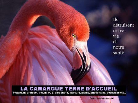 La_Camerde.JPG